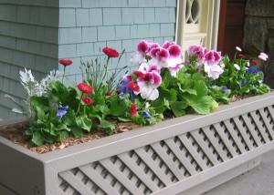 gardening basics: mulch and irrigation