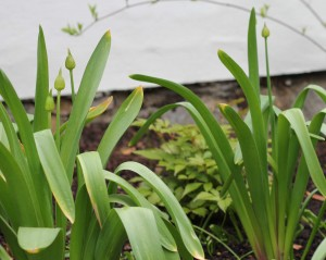 a year in my garden: april