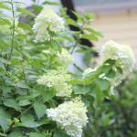 a year in my garden: july