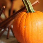 i brake for squash, part three: pumpkin puree and roasted pumpkin seeds