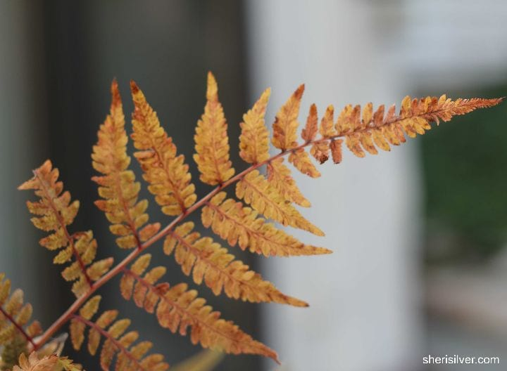 fern foliage in november