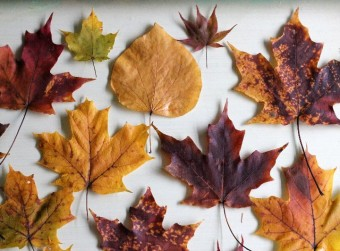 preserving autumn leaves