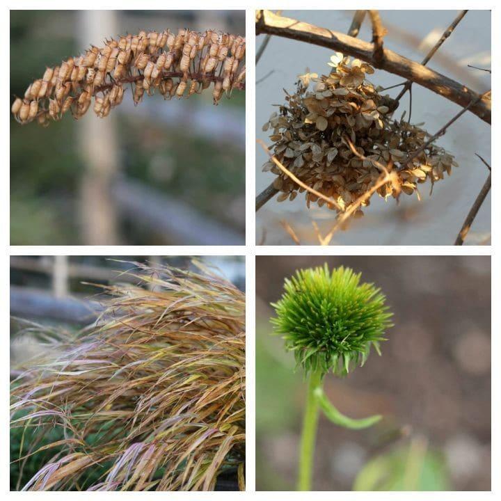 plant seedheads