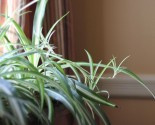 a houseplant for killers…