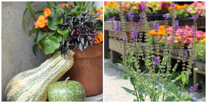 fall planter, perennial