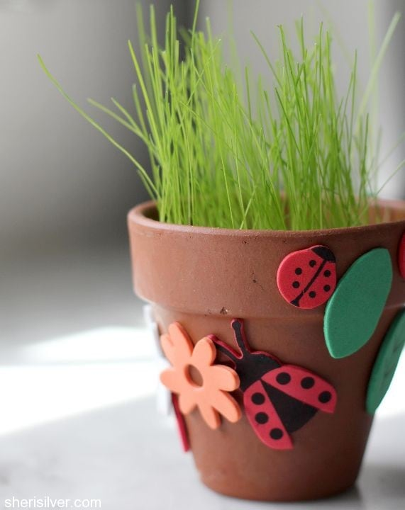 grow your own grass goody bags
