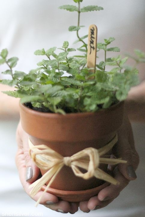 herb centerpiece