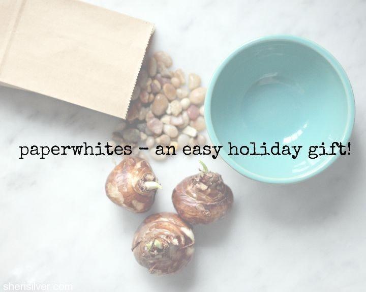 paperwhites gift