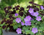 using perennials in planters