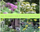 top 10 perennials that beat the heat