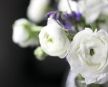the bouqs ranunculus