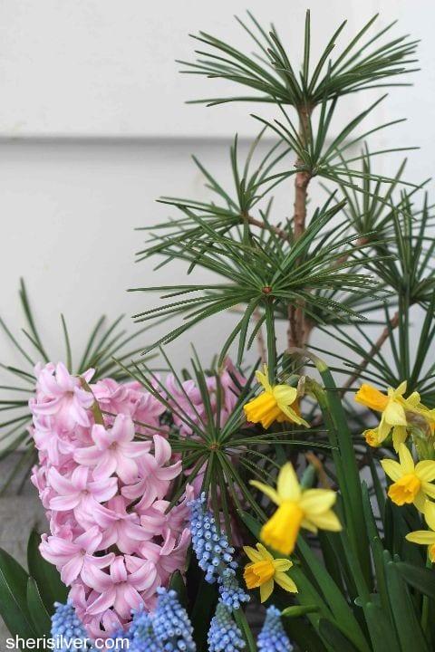 winter to spring planter