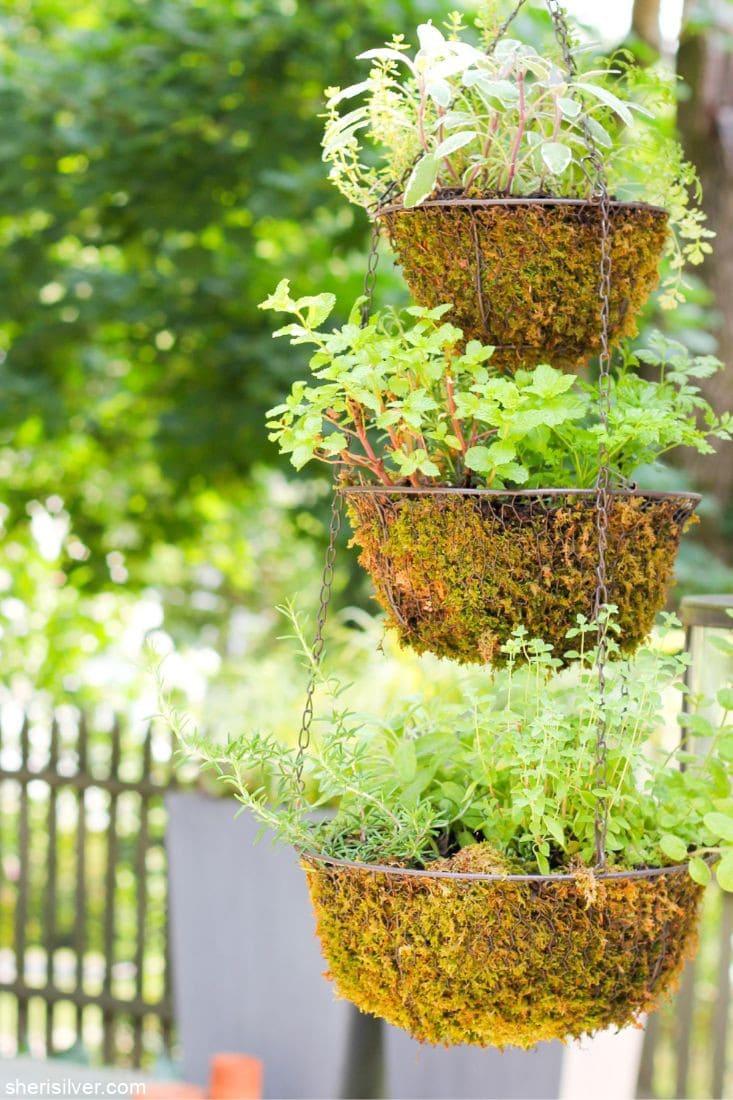 Hanging Herb Garden l sherisilver.com