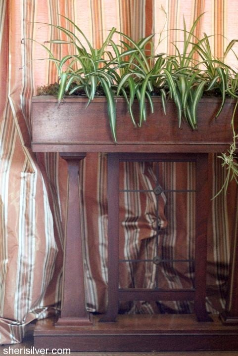 antique plant stand with spider plants