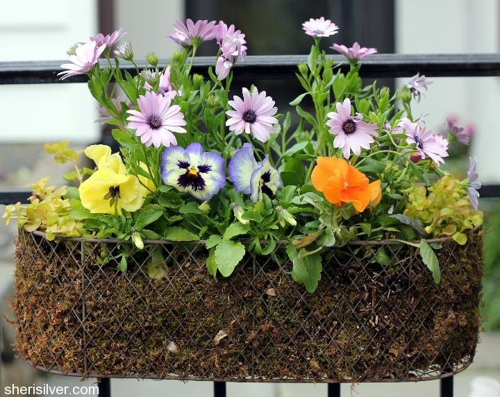 wire basket with spring flowers